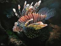 feuerfisch_1